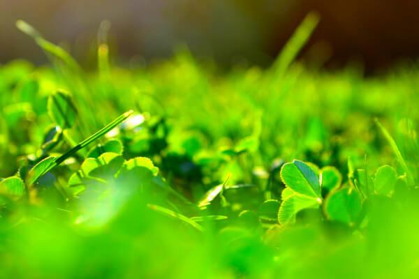 bioenergija